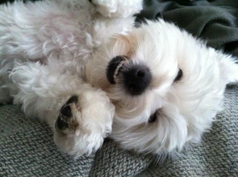 our dog Baxter